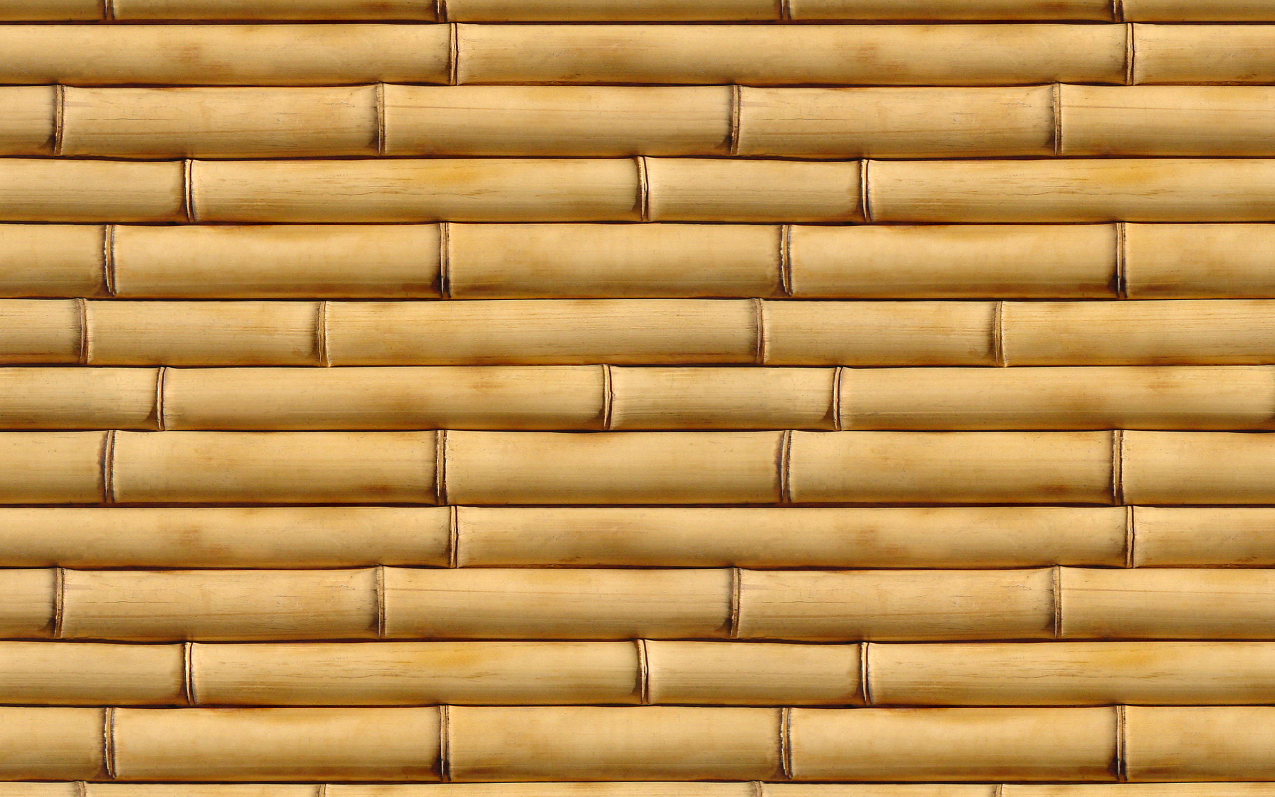 bamboo, texture bambooа, bamboo texture, photo, background