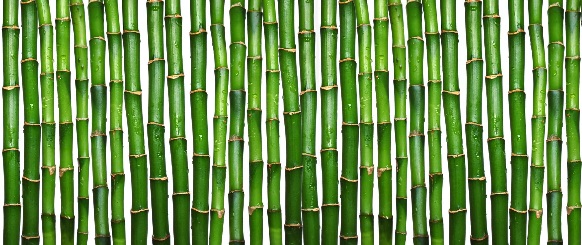 green bamboo, texture bambooа, green bamboo texture, photo, background