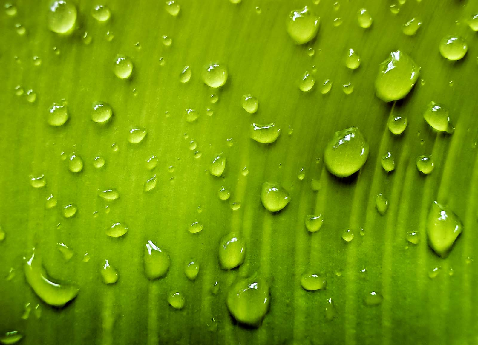 drops water leaf, leaf green, water drops texture, texture