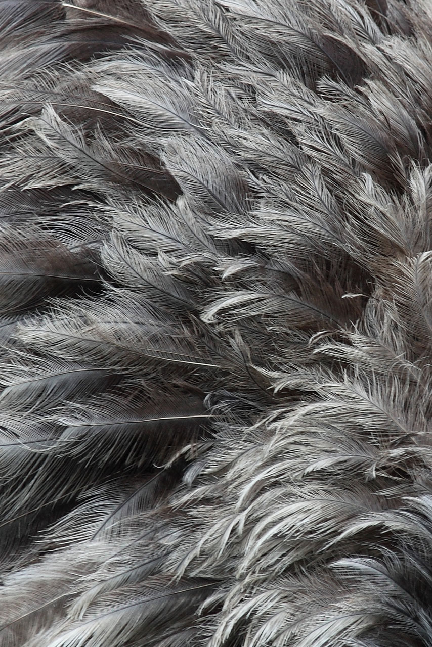 серые перья, texture feather, download background, photo, image, gray feather background texture