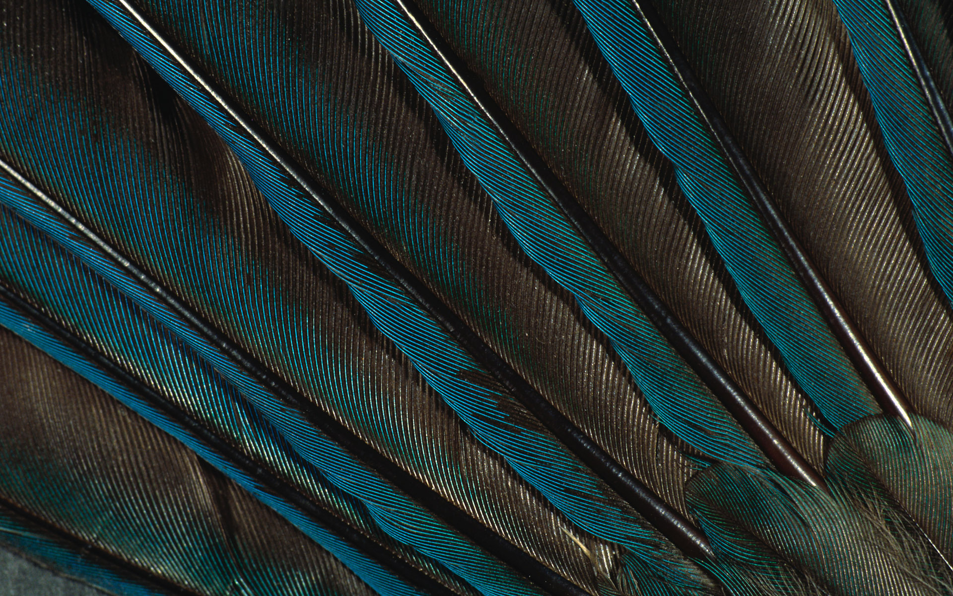 перья, texture feather, download background, photo, image, feather background texture