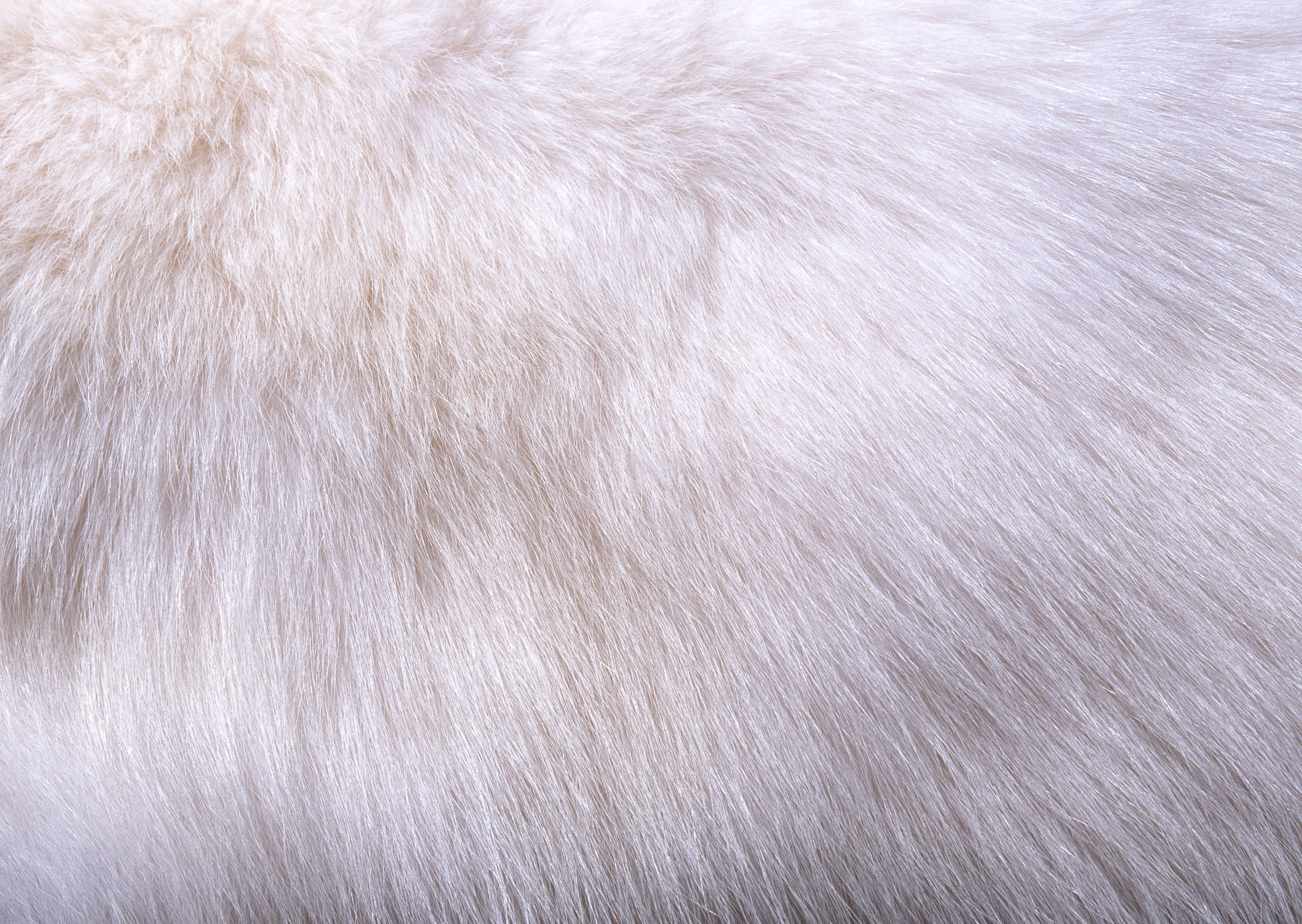 White fur texture background image