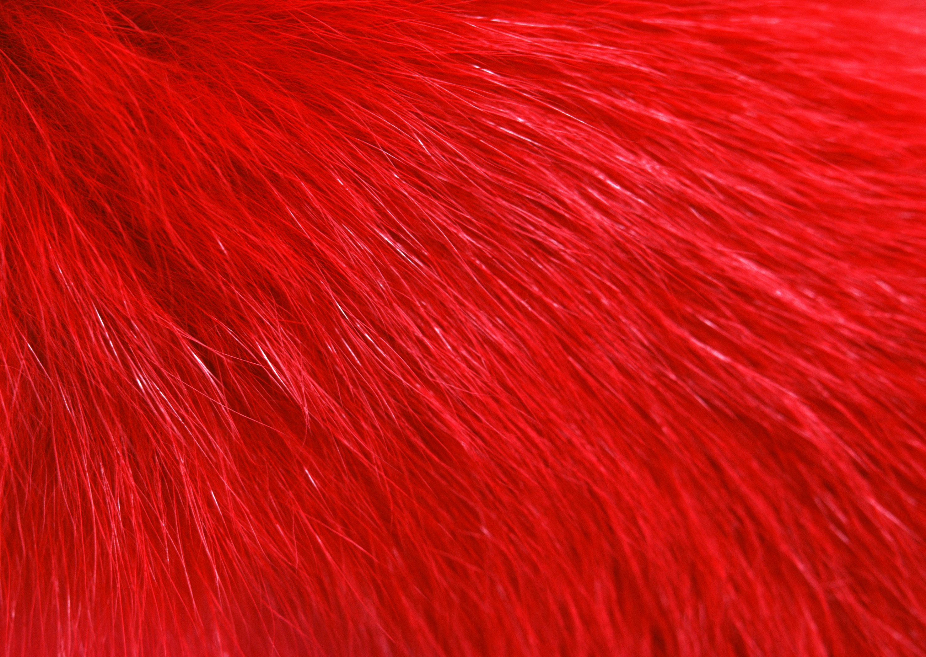 Red fur texture background image