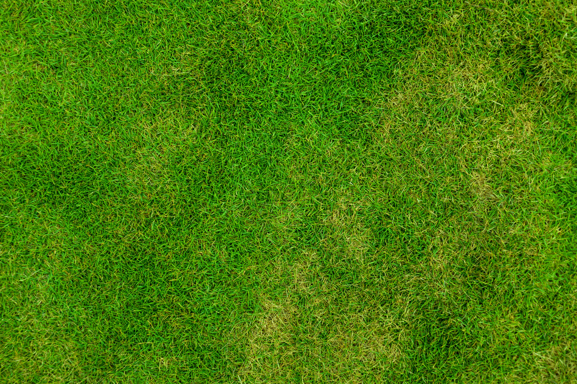 grass background texture - photo #2