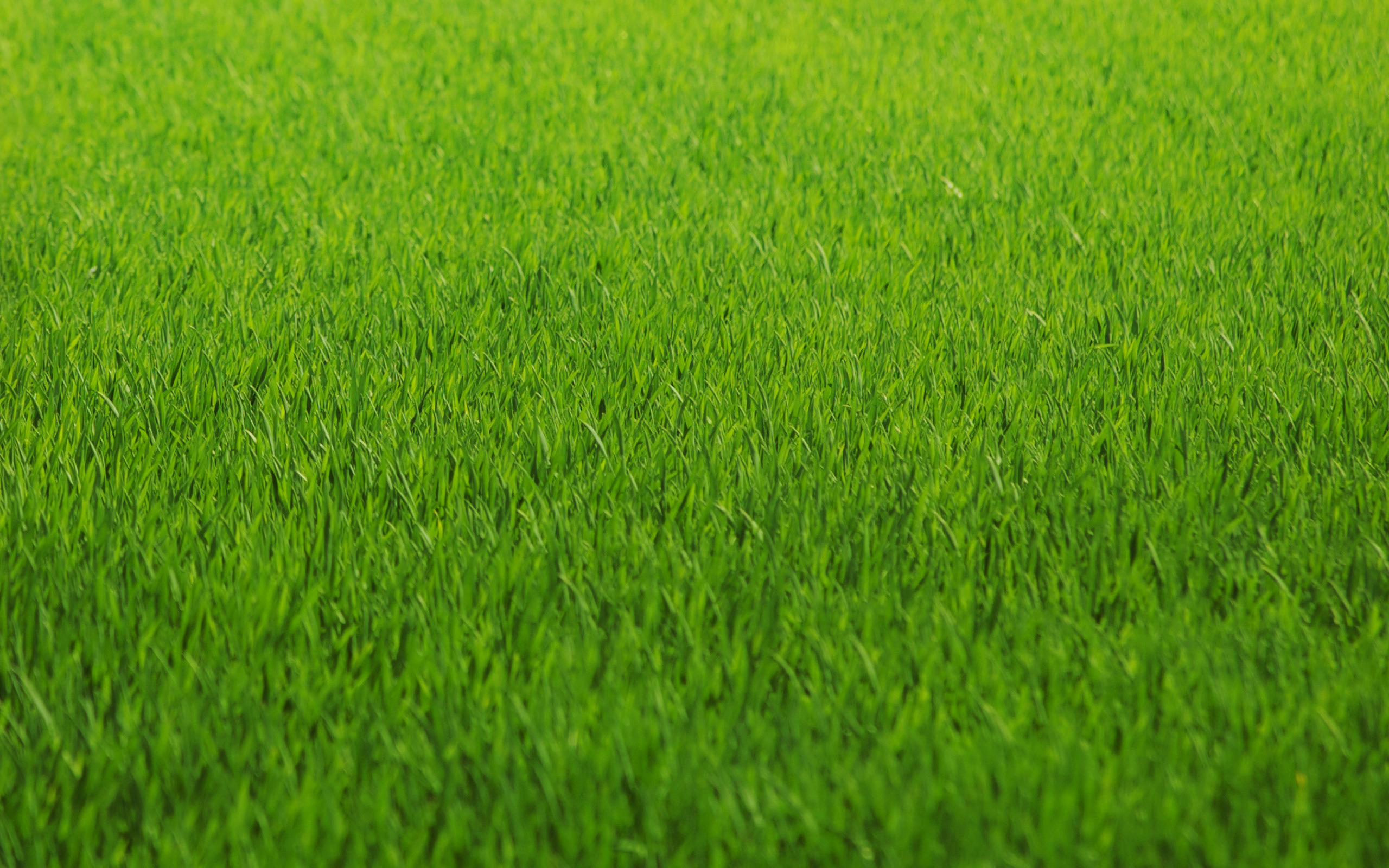 green grass background texture download photo green grass texture. Black Bedroom Furniture Sets. Home Design Ideas