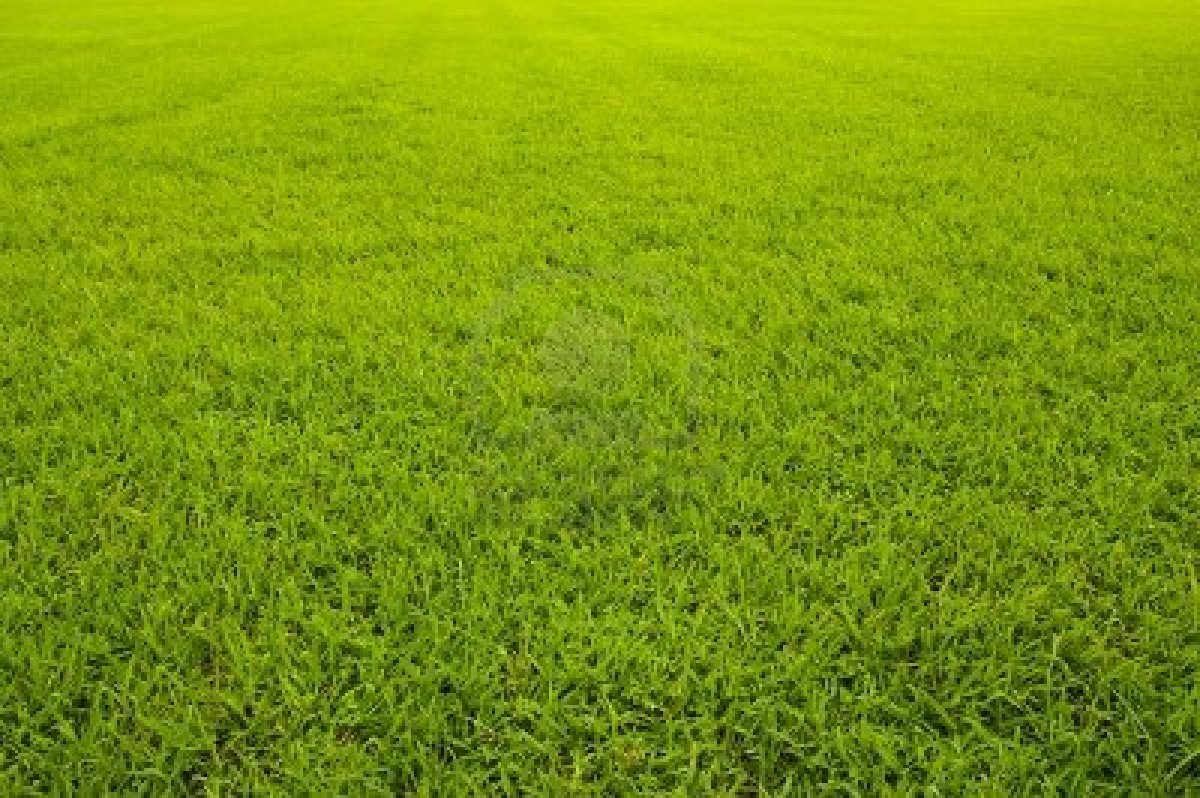 grass background texture - photo #26