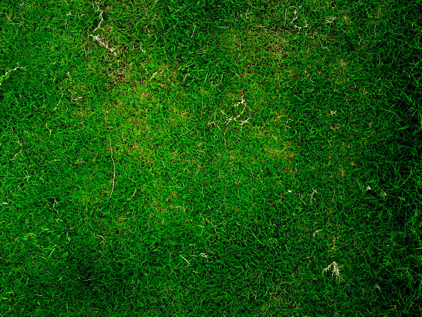 grass background texture - photo #14