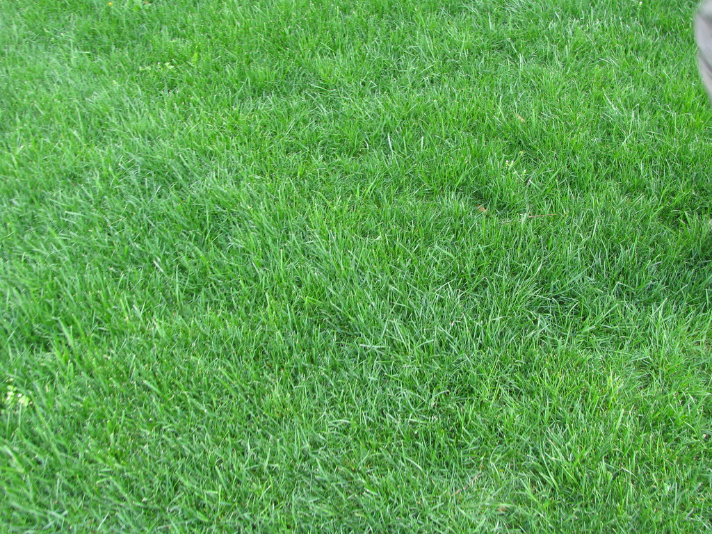 grass background texture - photo #16