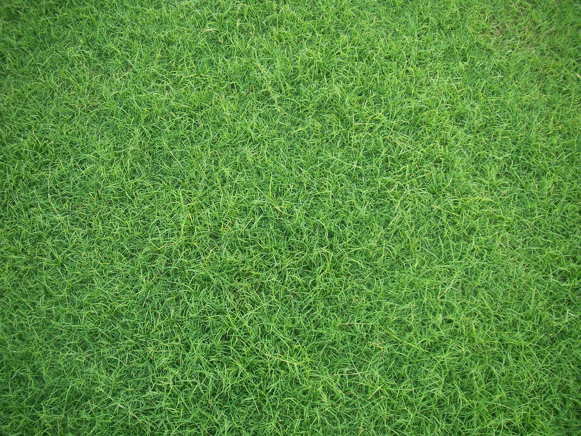grass background texture - photo #13