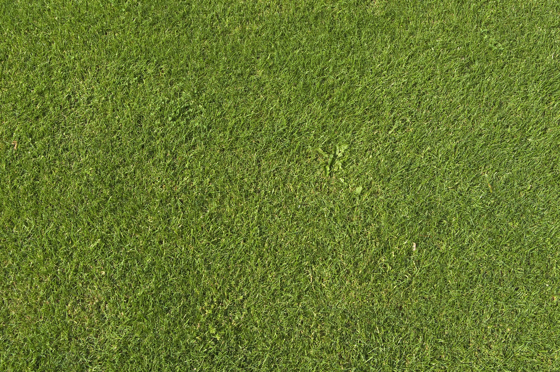grass background texture - photo #11