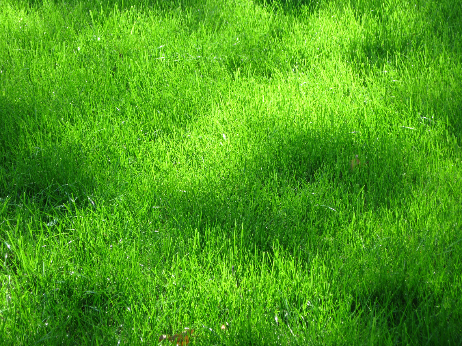 grass background texture - photo #27