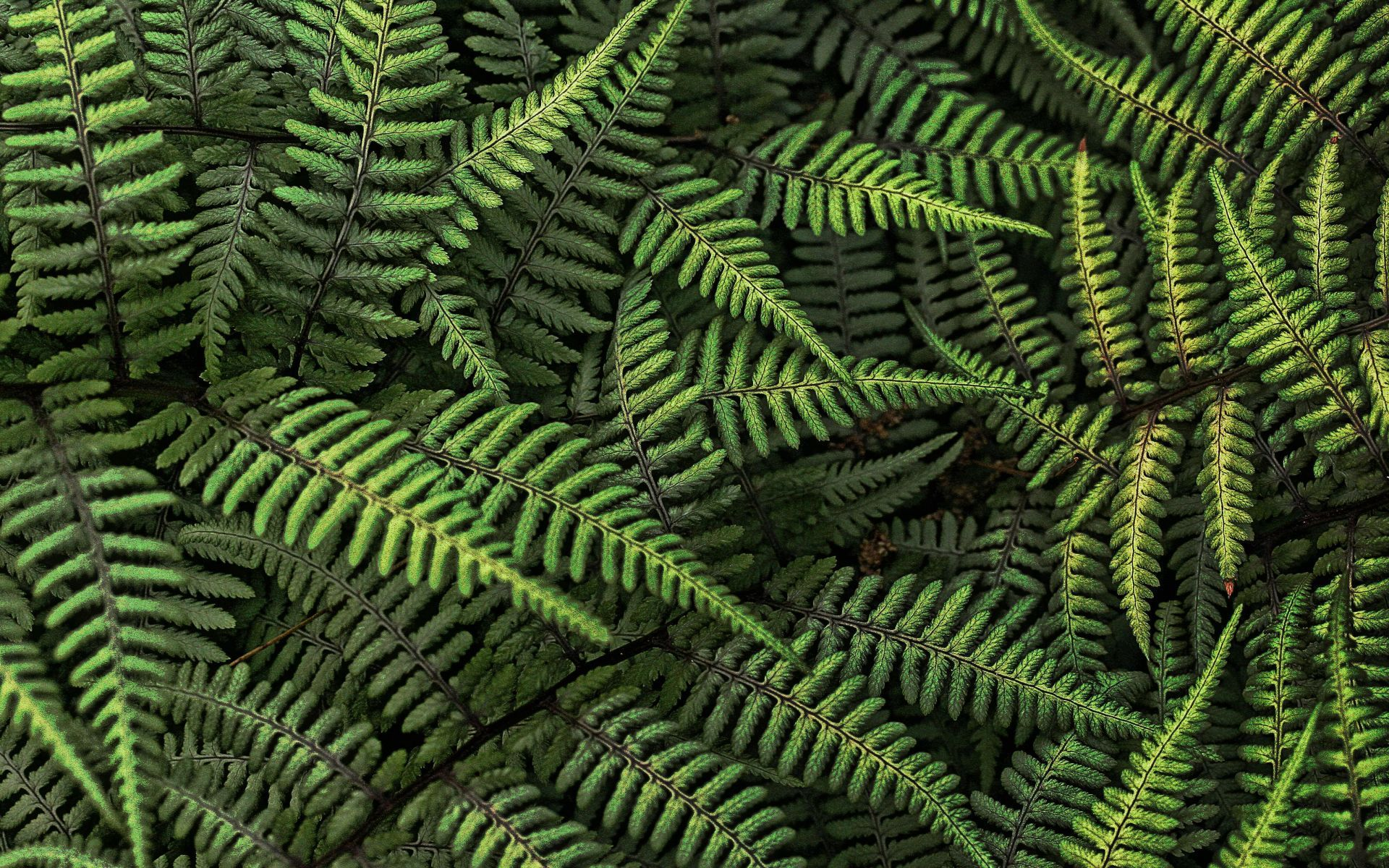 fern branches, download photo, green background, texture