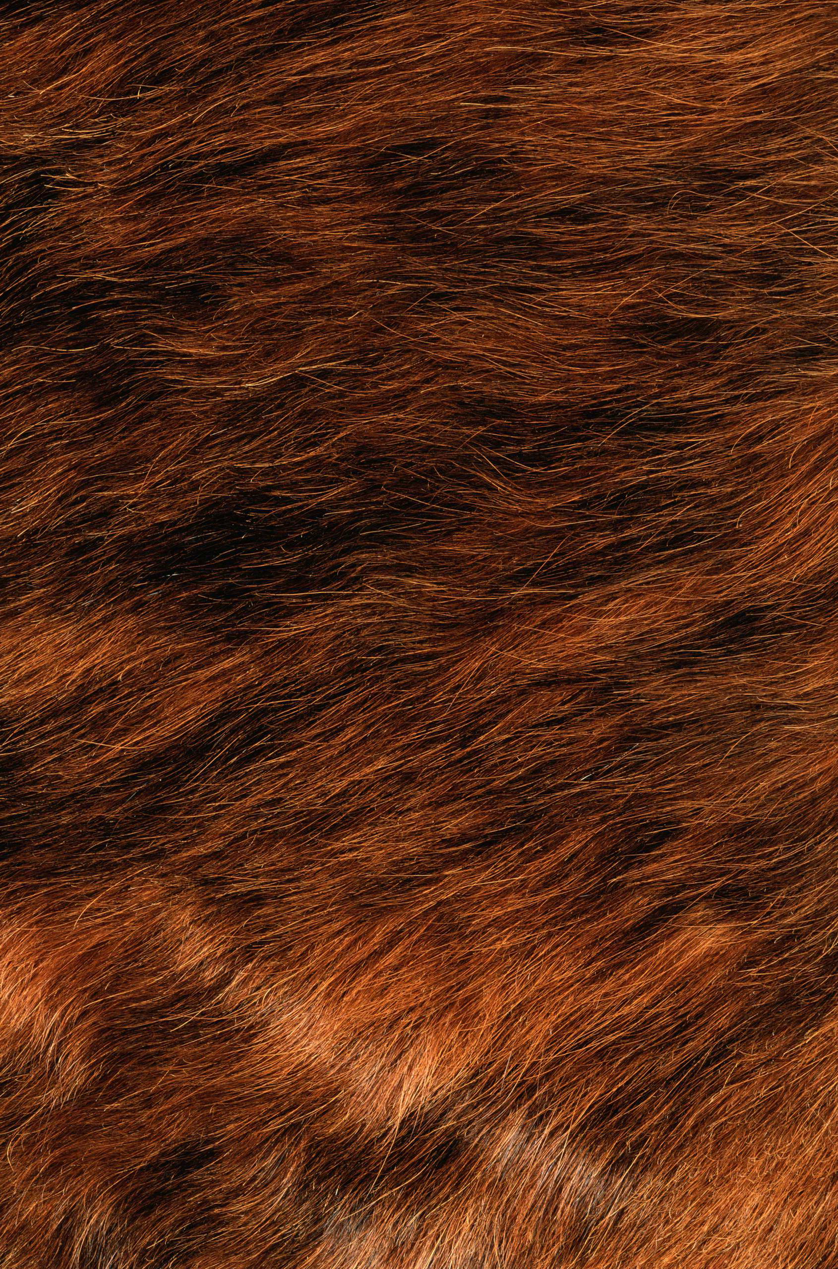 hair texture, background, orange hair texture, background