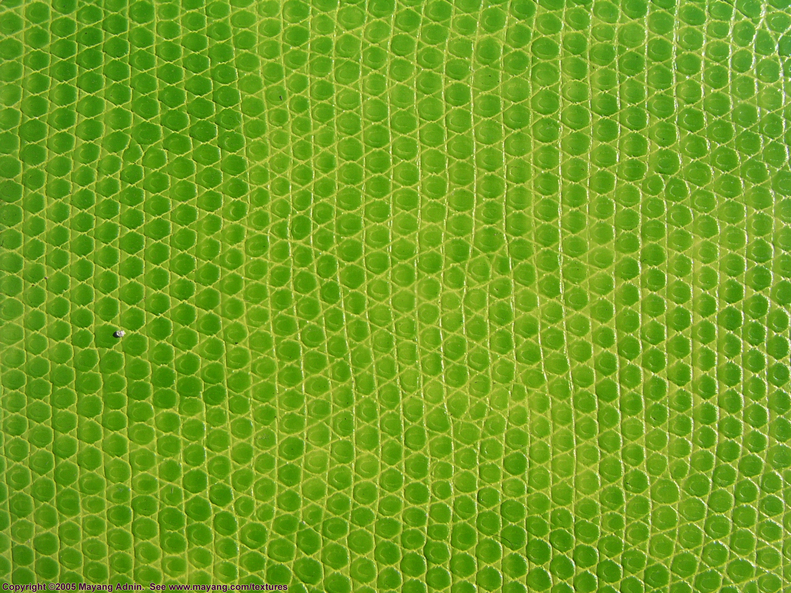 green snake leather texture, background, leather  background, leather background