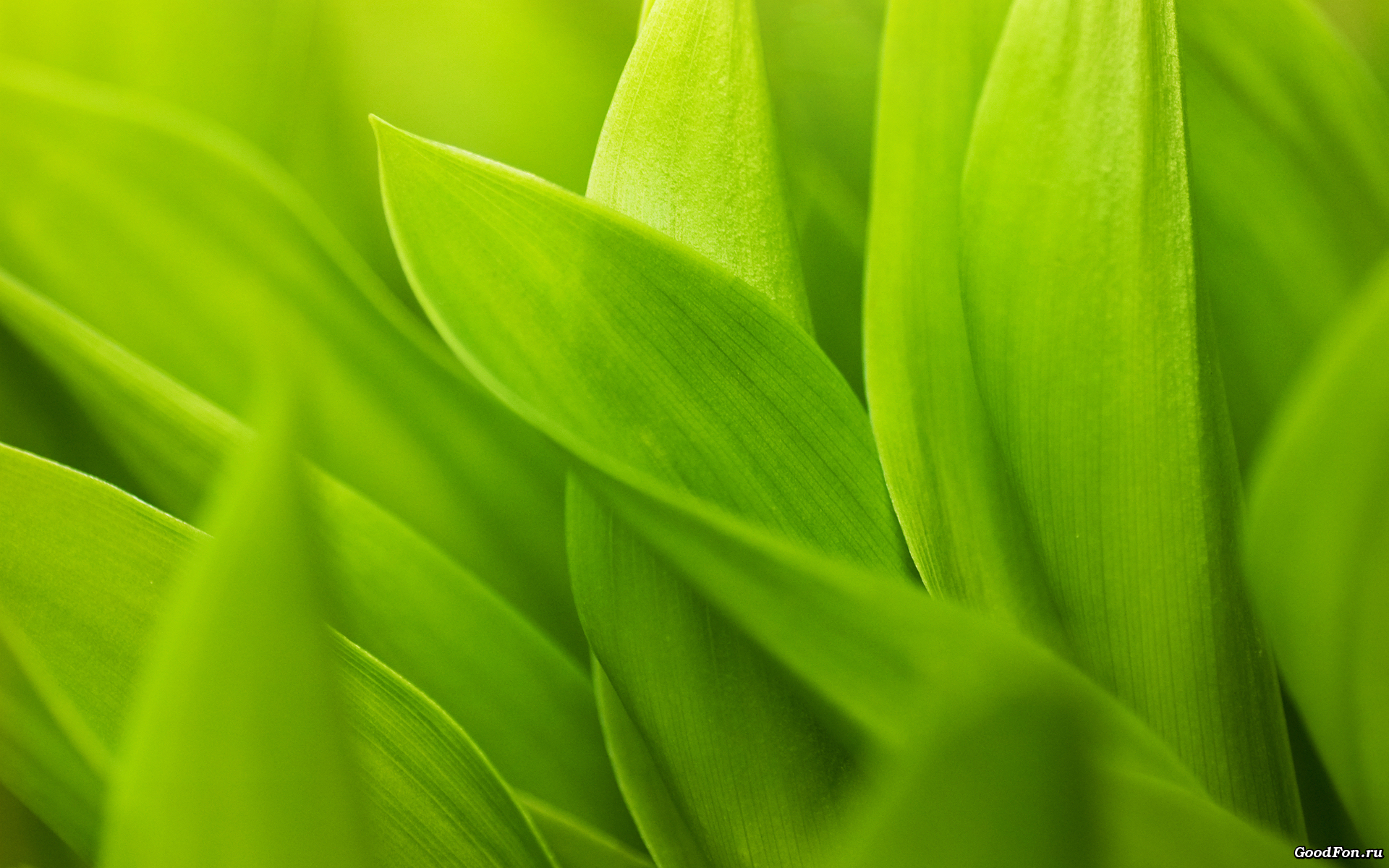 green leaves, download photo, background, texture