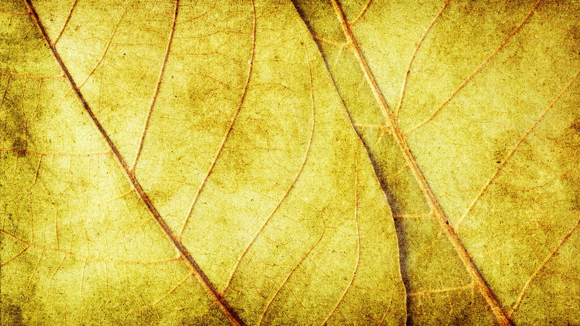 yellow dry leaves, download photo, background, texture