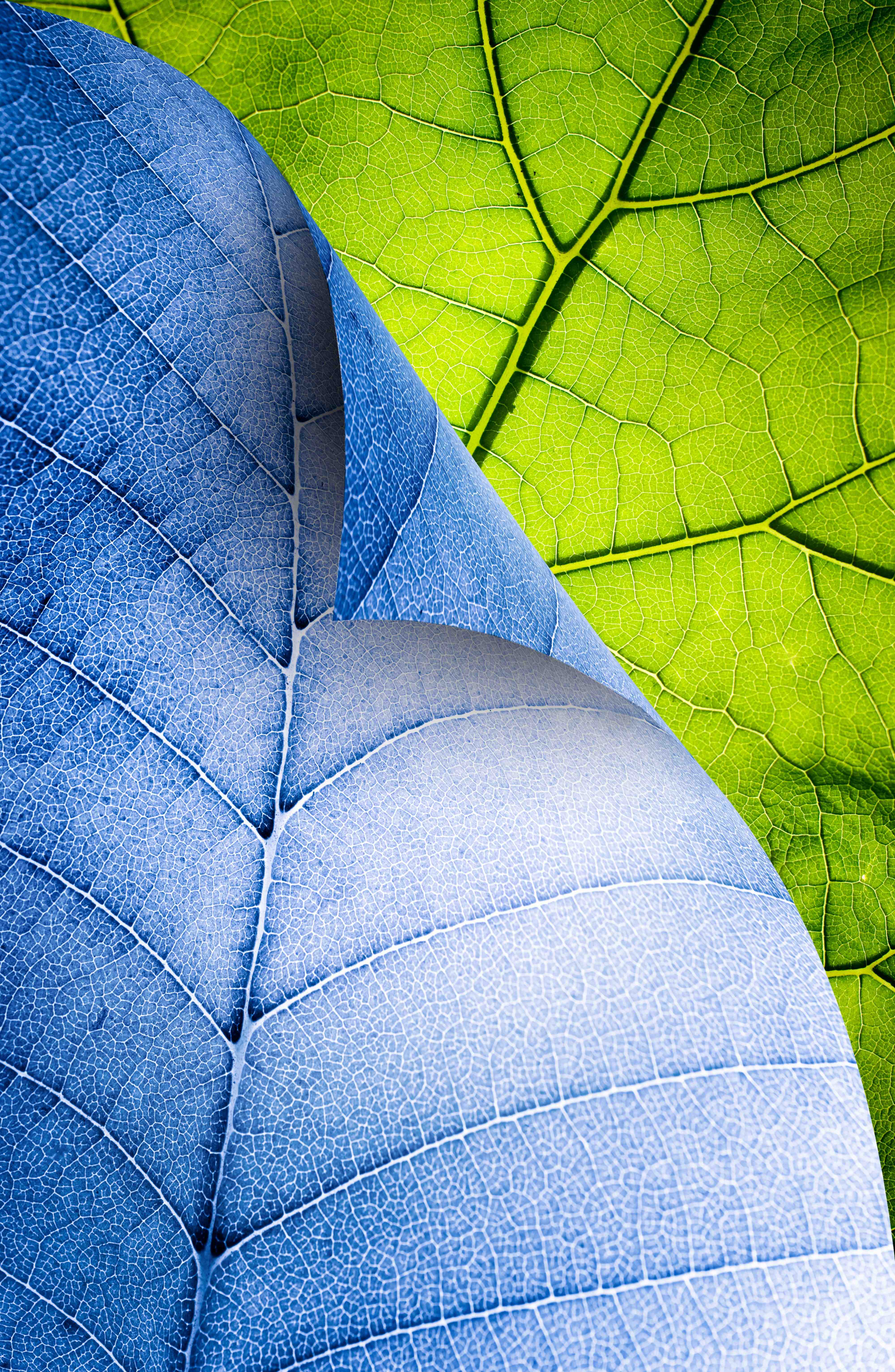 blue и green leaf, download photo, texture, leaves