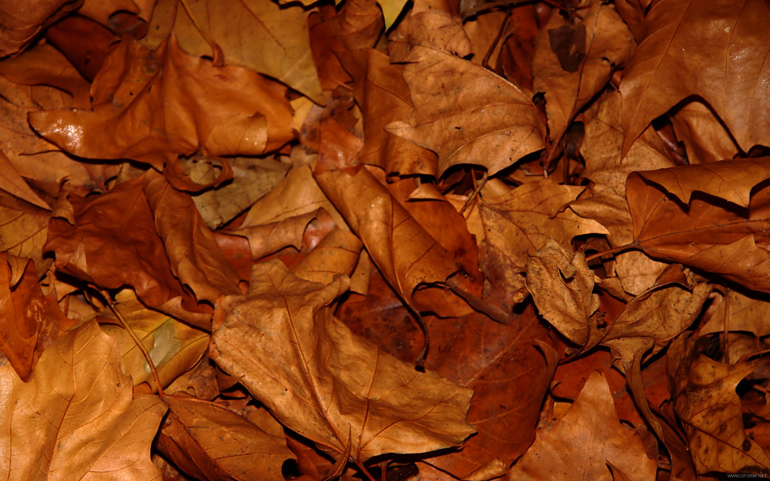 texture autumn leaf, autumn, foliage, download photo, leaves texture