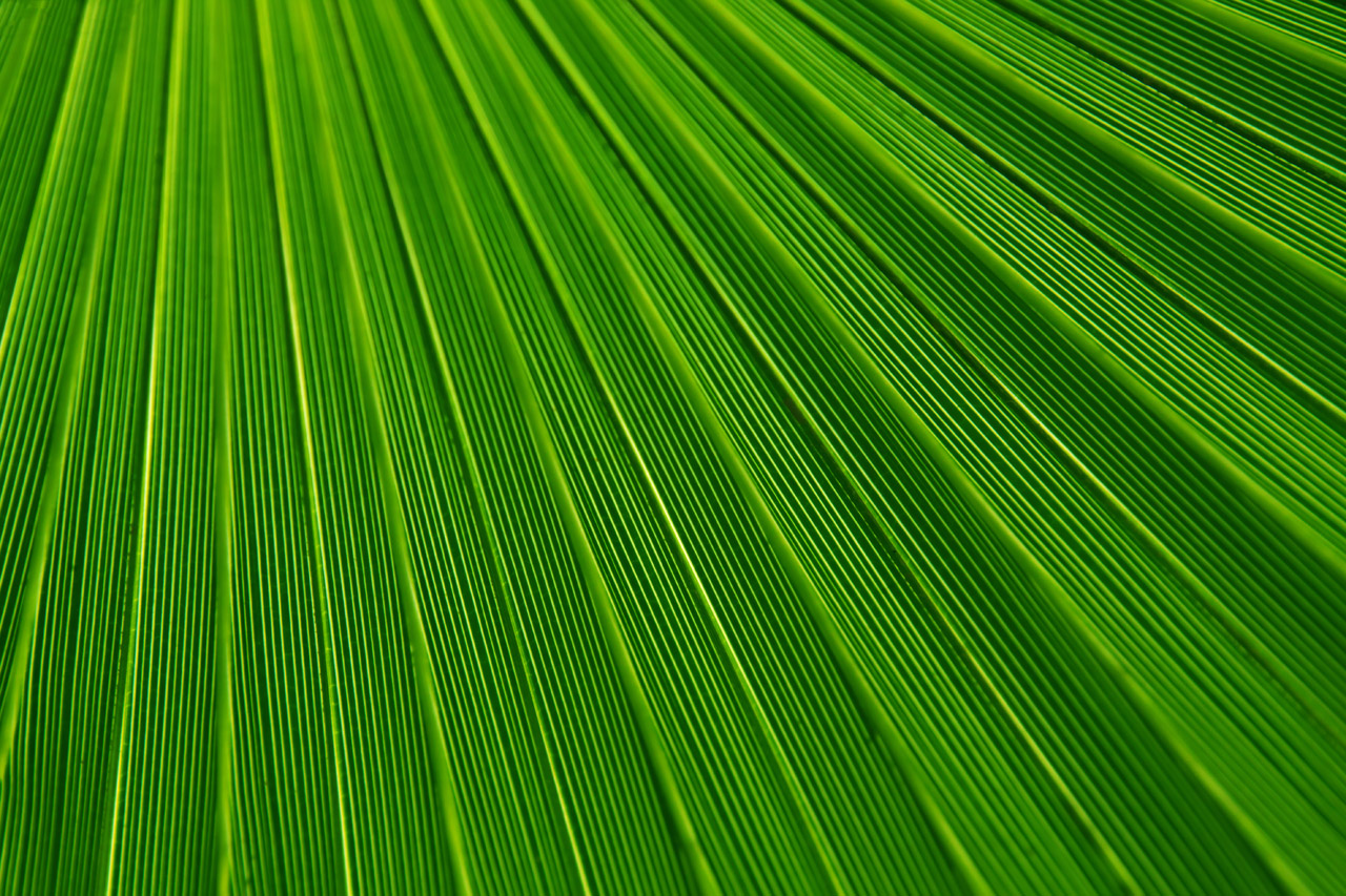 palm tree leaf texture, download photo background, texture