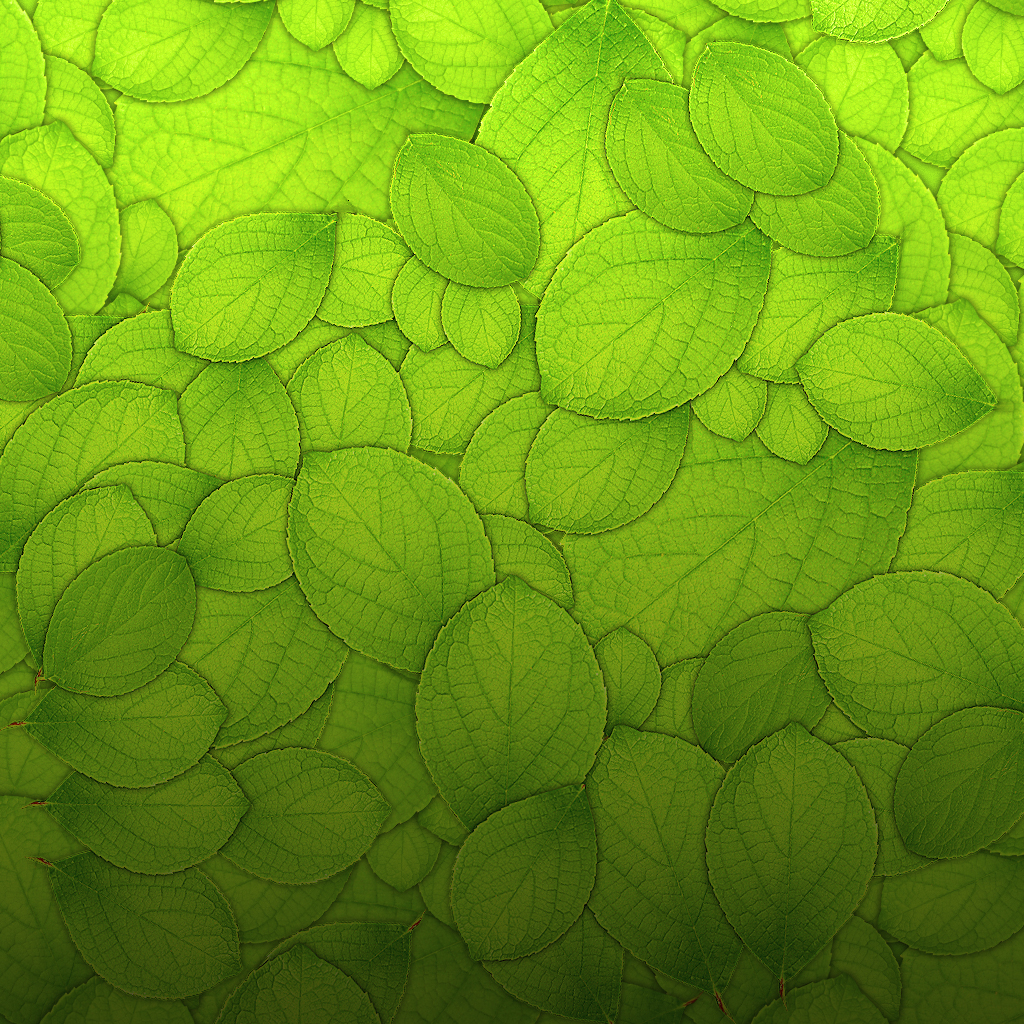 many green leafьев, download photo, background, texture, green leaves texture background