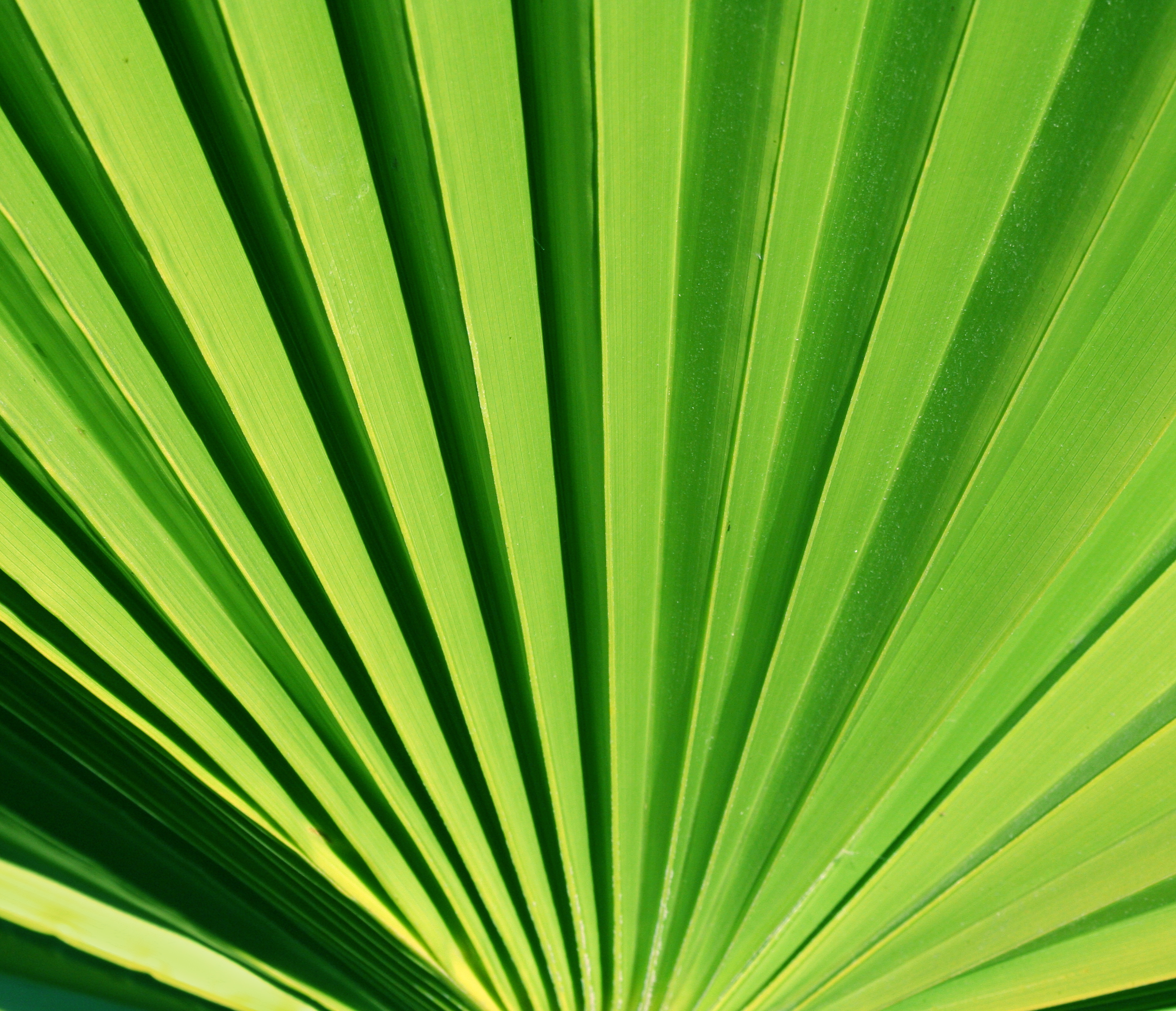 palm leaf texture background image - palm leaf texture background ...