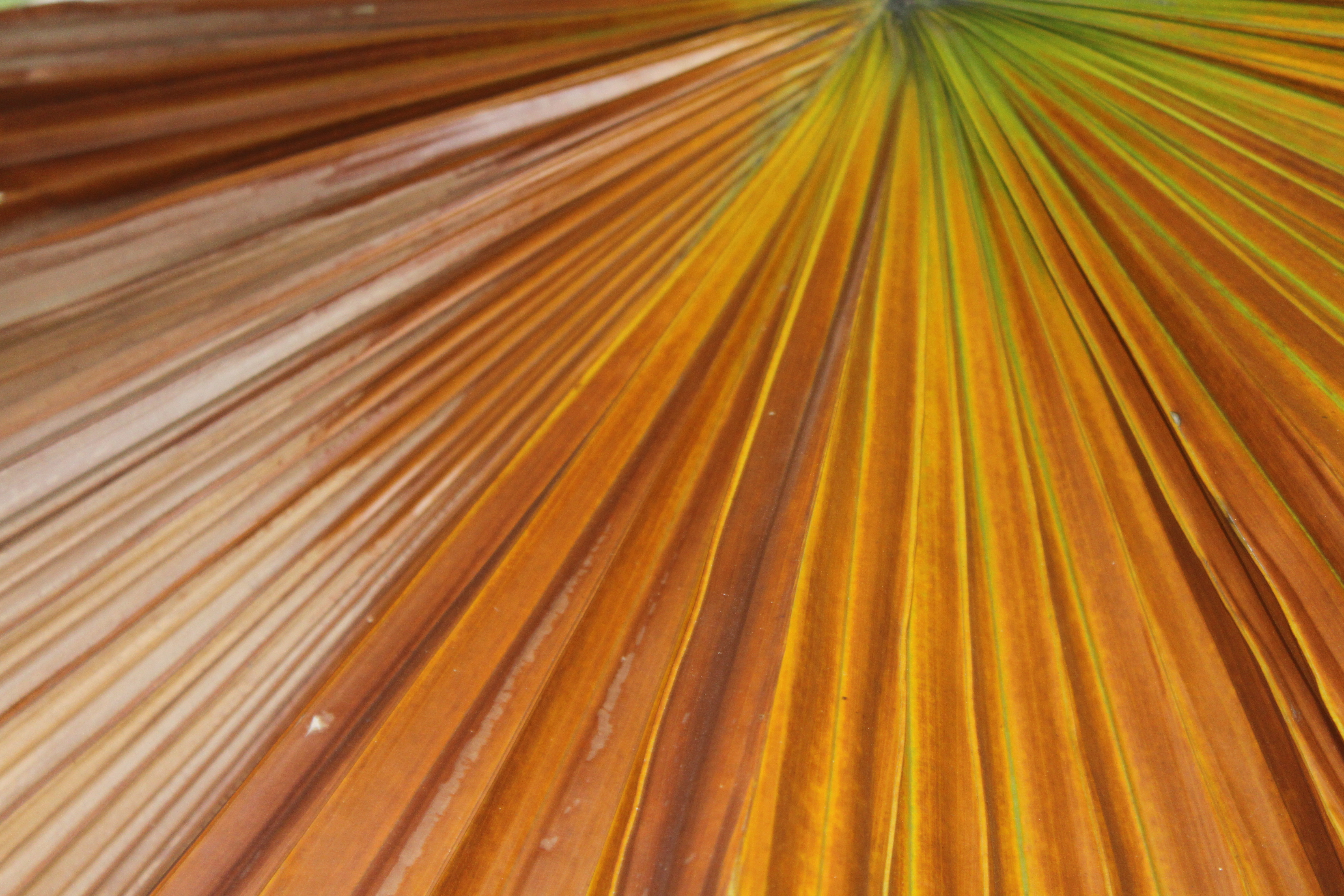 palm leaf texture background image