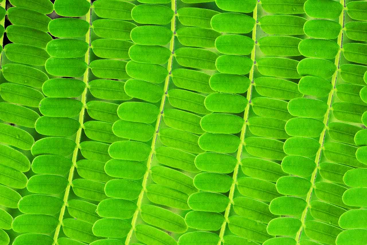 green leaves texture background image