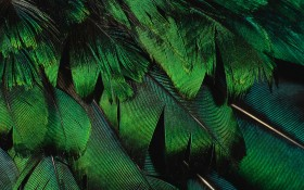 green перья, texture feather, download background, photo, image, green feather background texture