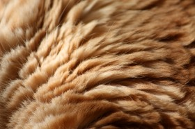 коричневый мех, texture fur, brown fur texture background, background