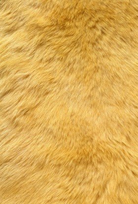 желтый мех, texture fur, yellow fur texture background, background