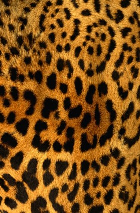 мех, leopard, skin, texture fur, leopard fur texture background, background