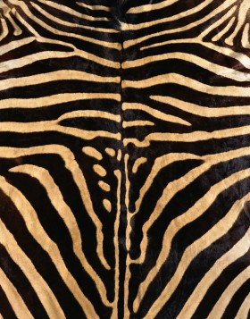 мех зебры, texture fur, zebra fur texture background, background