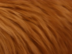 рыжий мех, лисий, texture fur, orange fur texture background, background