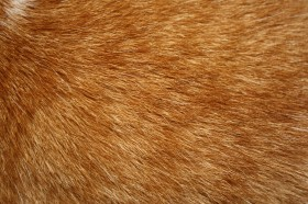 мех, texture fur, fur texture background, background
