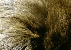 Natural fur texture background image