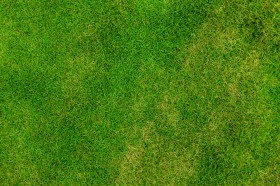 green grass texture, texture, download photo, background