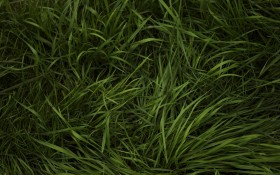 grass green, texture, background, download photo