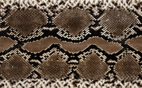 leather snakes, download background,  texture, skin snakes, snake wallpaper