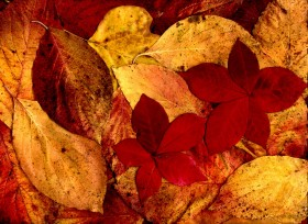 texture autumn leaves, autumn, foliage, download photo, leaves texture