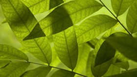 green leaves, download photo, texture, background