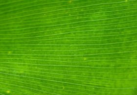 palm, leaf, texture, green leaf texture