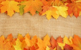 autumn leaves textures, download photo, background, background, autumn