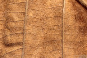brown dry leaf texture background image