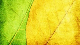 green and yellow leaf texture background image
