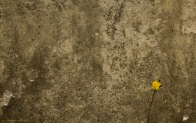 texture background, wall stone, stone и цветочек, download photo