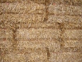 texture соломы, download photo, background, straw texture background