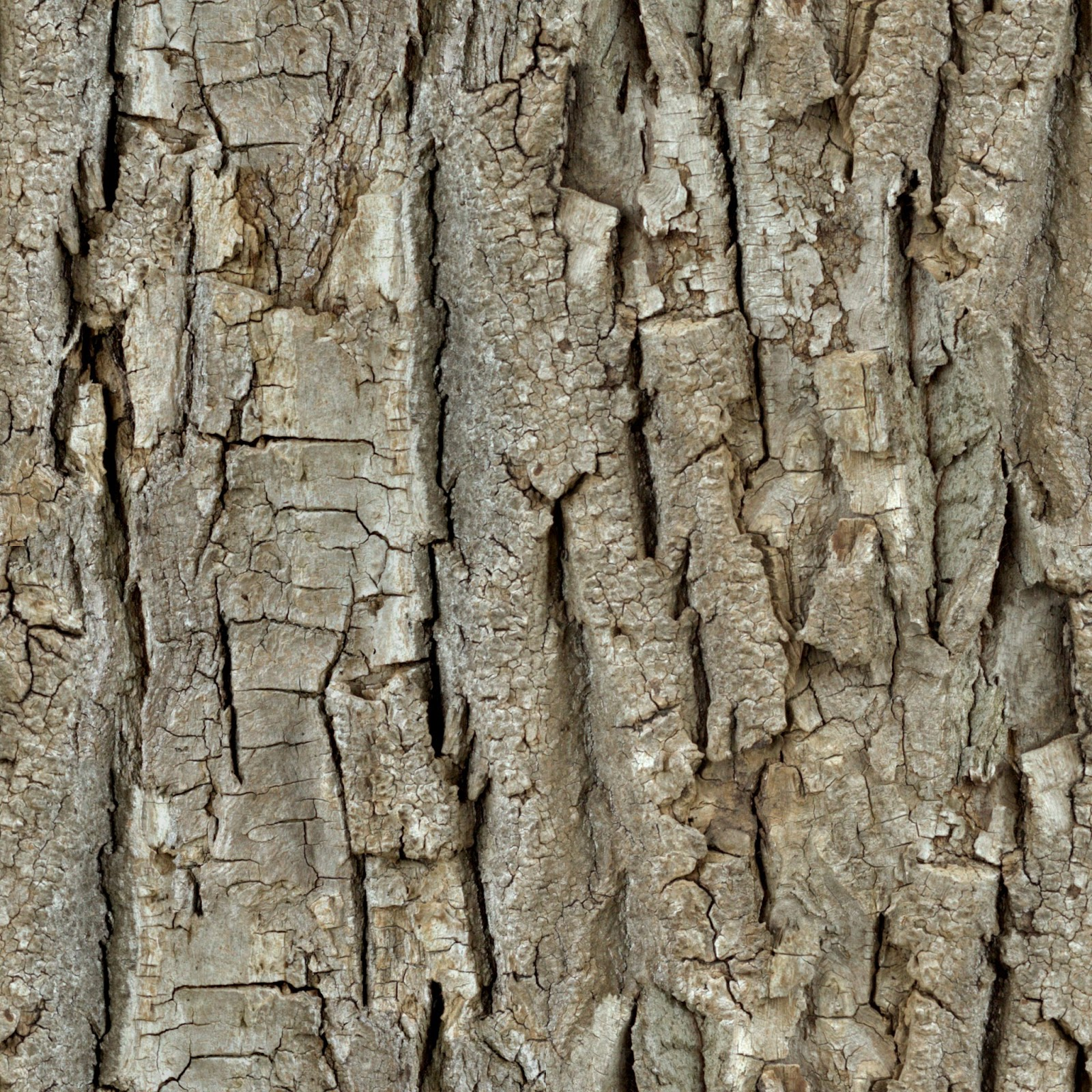 how to draw tree trunk texture