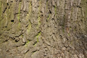 tree wood, tree wood, download photo, texture, background, download photo