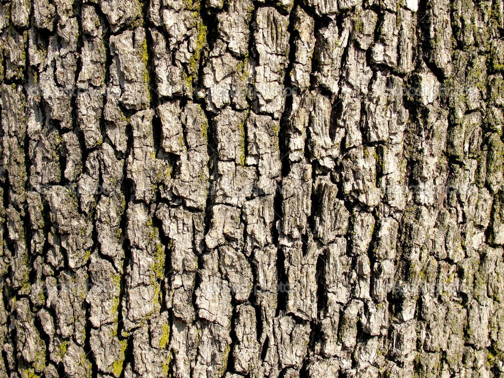 Oak Tree Trunk Texture further Oak Tree Bark Texture also File ecorce besides Old Grunge Wood Panels Used As Background Image 5965388 likewise Oak Bark Texture Seamless. on oak tree bark texture