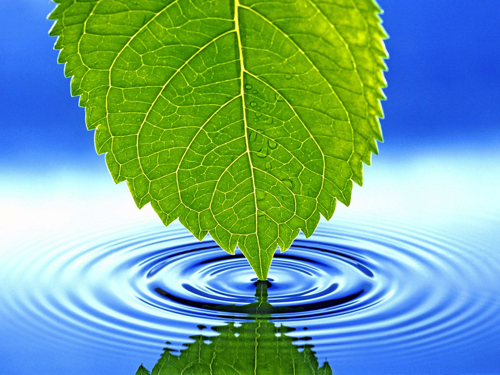 green leaf, blue, background, texture, blue water